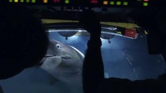 Une équipe de tournage filment des requins géants en train de dévorer une baleine