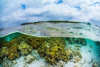 L'Australie crée une banque du sperme des coraux pour sauver ses récifs
