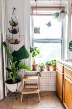 des-plantes-vertes-sur-l-appui-de-fenetre