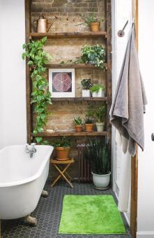 des-plantes-vertes-sur-une-etagere-de-salle