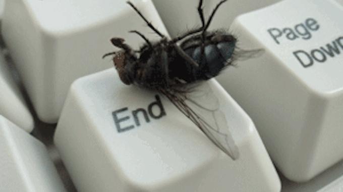comment-eloigner-mouches-maison-6795