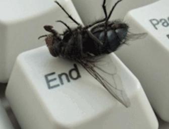 Marre des mouches : Les astuces pour s'en débarrasser naturellement
