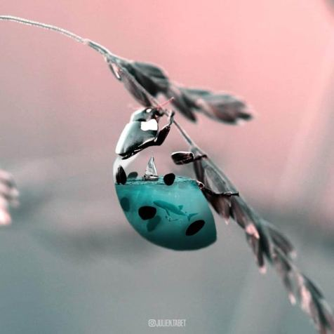Julien-Tabet-animaux-surrealistes_11