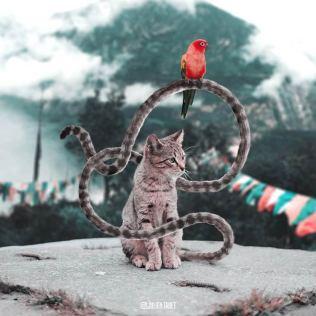 Julien-Tabet-animaux-surrealistes_15