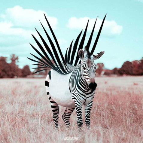 Julien-Tabet-animaux-surrealistes_19