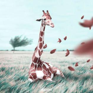 Julien-Tabet-animaux-surrealistes_4