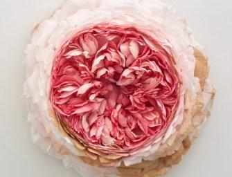 « What Befell Us » : l'exposition de fleurs géantes de l'artiste Tiffanie Turner