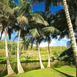 Maison à Hawaii (2)