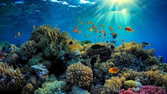 Pourquoi les écrans solaires chimiques sont mauvais pour les récifs et les humains ?