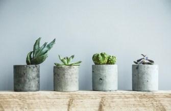 Comment entretenir vos succulentes ?