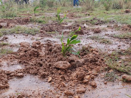 350-million-trees-planted-record-green-legacy-ethiopia-5d415a6ee83fe__700