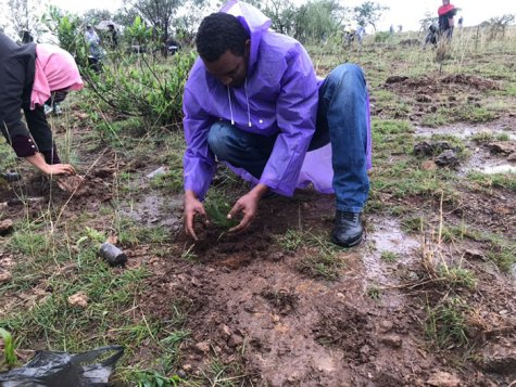350-million-trees-planted-record-green-legacy-ethiopia-5d415c4df31ac__700