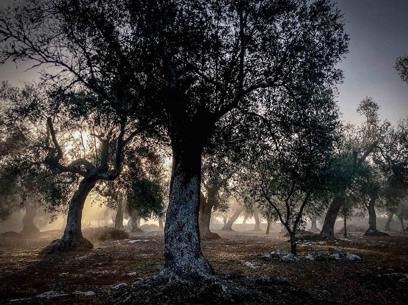 © Neil Bennett, 'Morning Mist'