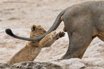 39 photos du concours Comedy Wildlife 2019 qui montrent à quel point la nature peut être amusante