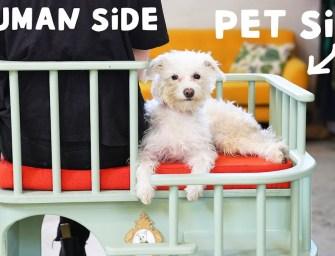 Un fauteuil pour votre animal de compagnie qui a besoin d'être prêt de vous