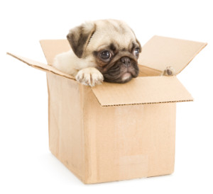 Do-It-Yourself Packing Guide and Tips: Boxes