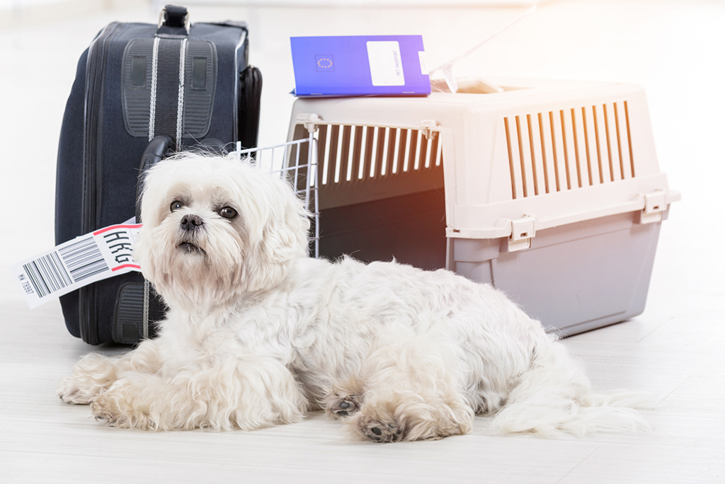 international travel with dogs
