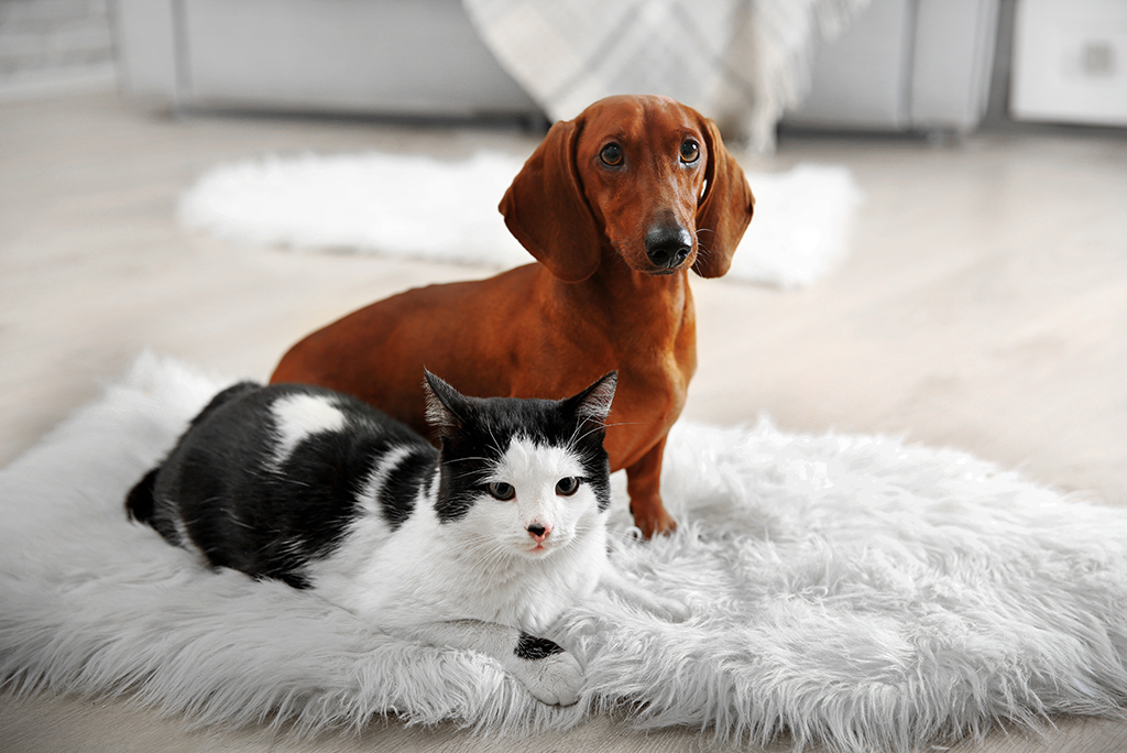 How to Make the Home Selling Process Easier on Pets