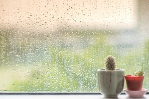 raining outside window