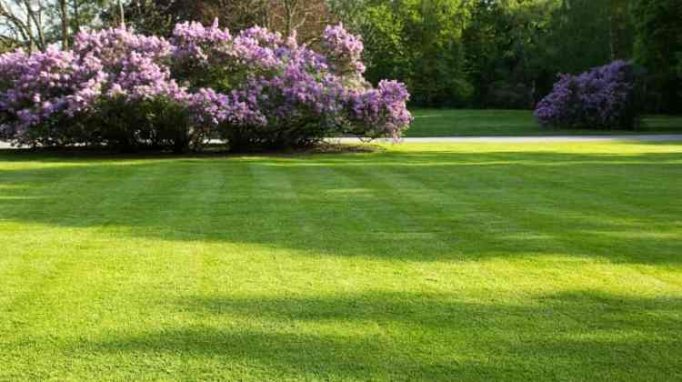 Spring Lawn care Tips for a Lush, Green Lawn
