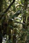 Lady Bird Johnson Grove 07