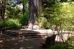 Redwood National Park 01