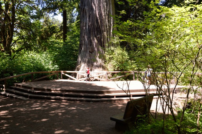 The Big Tree was once thought to be the tallest tree in the world ... and then they found another grove of redwoods that are taller. Now, it's just rather uncreatively named.
