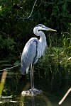 Everglades NP 21
