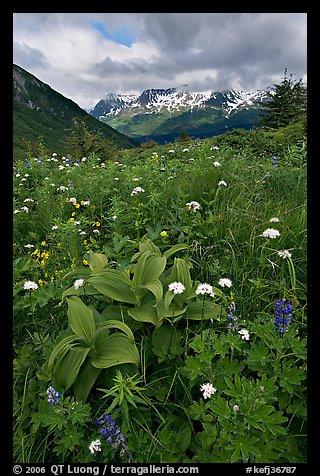 Kenai Fjord NP 16