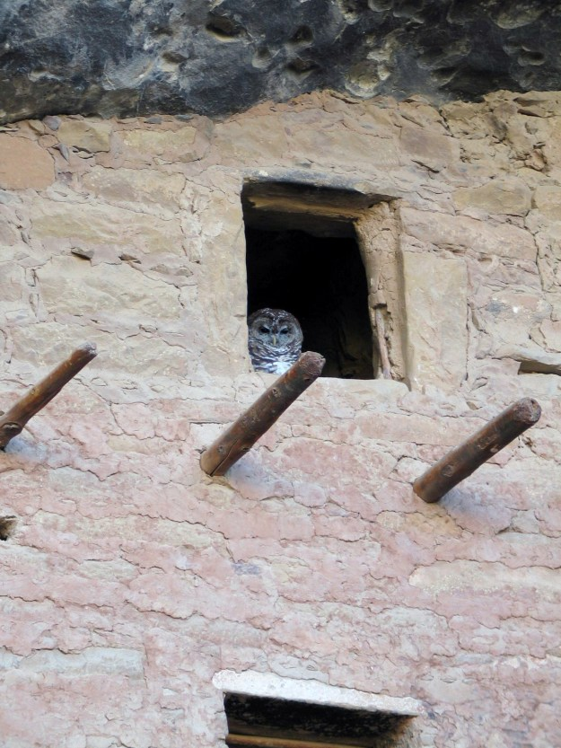 Spotted Owl. From the Park's website.