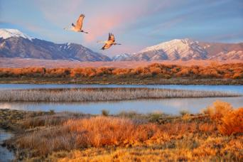 Two Sandhill Cranes flying over a wetland in the Park. March 2014. Photo: Patrick Myers. Posted by the US Department of the Interior on Tumblr, 3/20/14.