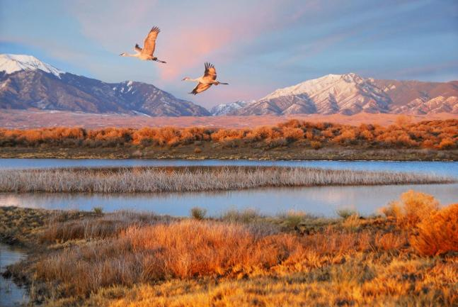 Two Sandhill Cranes Flying Over a Wetland West of the Dunes. From the Park's Flickr stream. http://creativecommons.org/licenses/by/4.0/