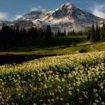 Mt Rainier NP 02