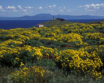 The bright yellow bouquets of the giant coreopsis are so vivid they can sometimes be seen from the mainland. Photo by: Derek Lohuis. From the Park's website.