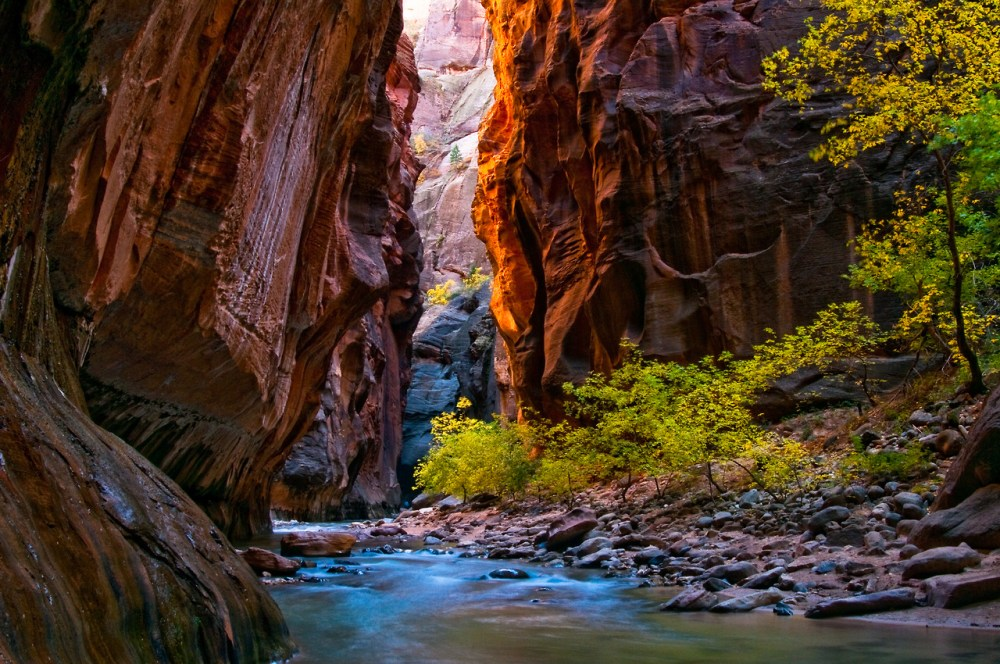 The changing fall colors in Utah's Zion National Park. This is in The Narrows, which has canyon walls 1,000' tall. Photo by Kevin Roland. Tweeted by the US Department of the Interior, 10/26/14.