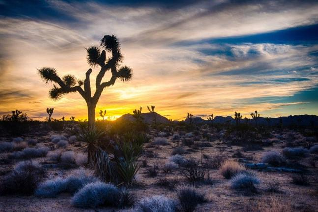 A silhouetted joshua tree ... in Joshua Tree National Park. Photo by Jaganath Achari. Posted on Tumblr on 11/27/14 by the US Department of the Interior.