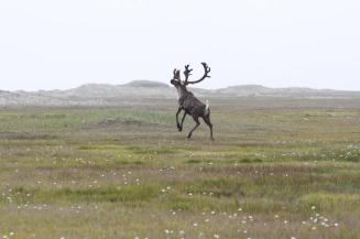 Reindeer have a right to be playful this time of year, right? Tweeted by the US Department of the Interior, 12/24/14.