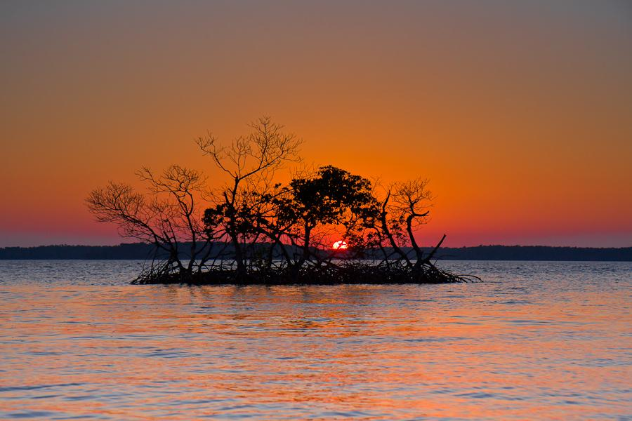 Everglades National Park. Photo by James Pion. Tweeted by the US Department of the Interior,  4/22/15.