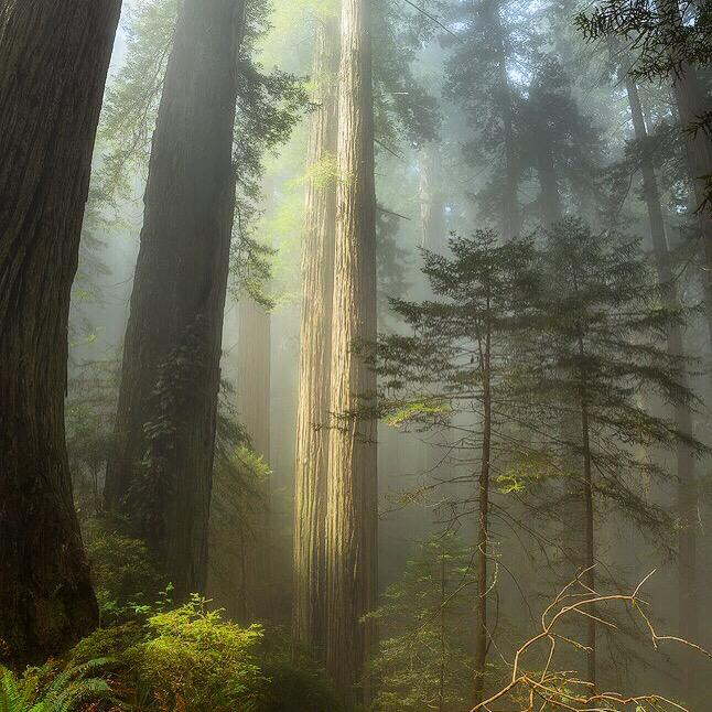When George Lucas filmed Star Wars, he used the California Redwoods as the home of the Ewoks. The Redwoods National & State Parks (they are intertwined) are truly a magical place, seen here at first light. Photo by Scotty Perkins. Tweeted by the US Department of the Interior, 7/3/15.