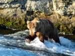 Katmai NP 35 – 755 Scare D Bear