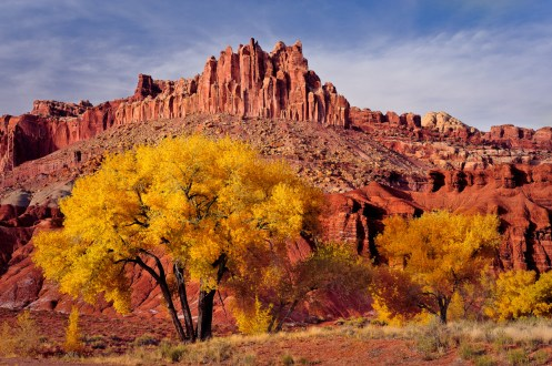 Autumn colors of cottonwood trees in front of the Castle in Capitol Reef National Park, Utah on November 3, 2011. Posted on Tumblr by the US Department of the Interior, 11/13/15.