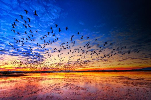 Sunrise takeoff at Bosque del Apache National Wildlife Refuge. Photo by Kim Hang Dessoliers. Tweeted by the US Department of the Interior, 11/18/15.