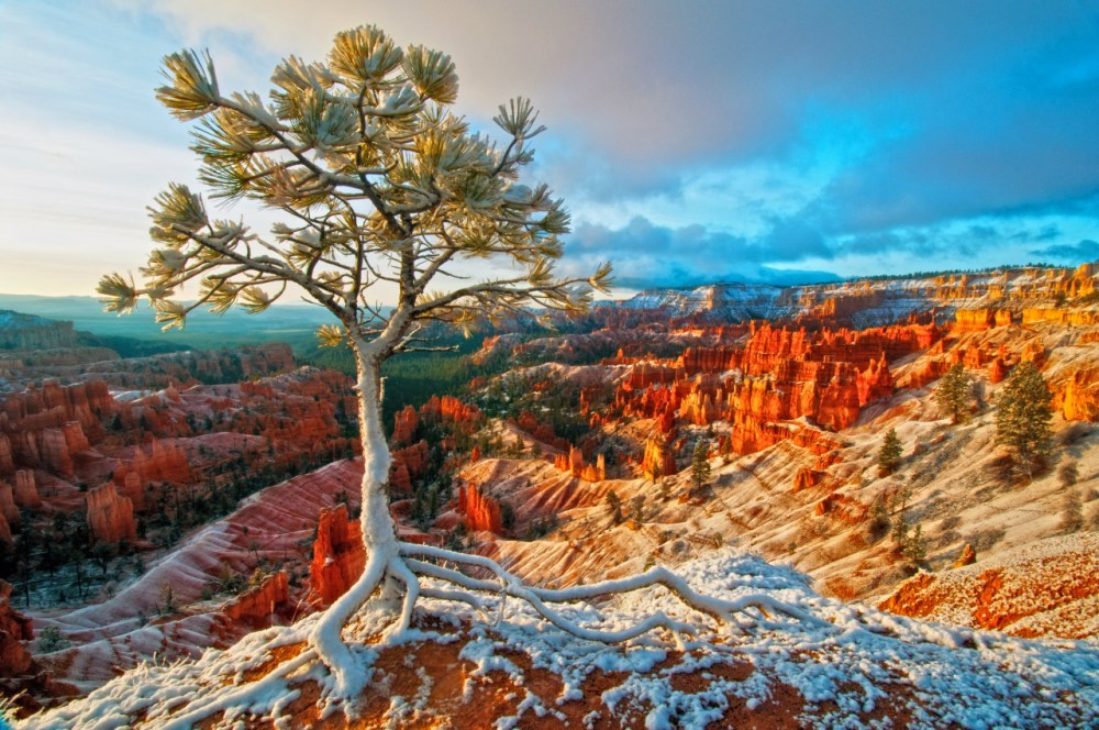 Bryce Canyon National Park in Utah shimmers in sunlight and snow. We love how the snow clings to the trees and hoodoos (odd-shaped pillars of rock left standing from the forces of erosion). What a terrific winter scene! Photo by Curtis Kautzer. Posted on Tumblr by the US Department of the Interior, 12/28/15.