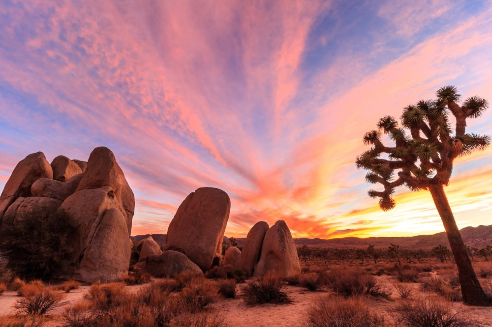 Joshua Tree National Park is an immense wilderness, protecting nearly 800,000 acres of California desert. The park is home to exposed granite monoliths, rugged canyons and extensive stands of the Joshua tree – the peculiar looking plant that is the park's namesake. Sunsets are pretty spectacular here too. Photo by David Curry. Posted on Tumblr by the US Department of the Interior, 12/26/15.