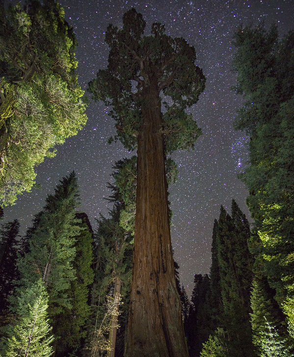 The General Sherman Tee is the world's largest tree in the Sequoia National Park. The photographer used light painting to get this effect in their nighttime shoot. Photo by Christian Loya. Tweeted by the US Department of the Interior, 1/20/16.