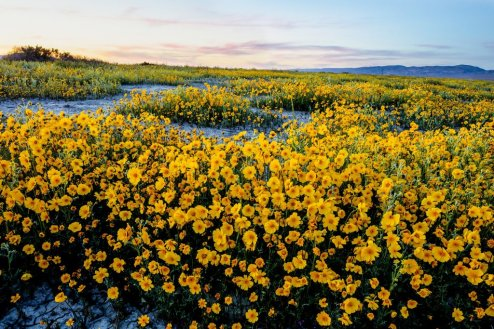 Wildflowers cascade at California's Carrizo Plain National Monument. Tweeted by the US Department of the Interior, 3/29/16.