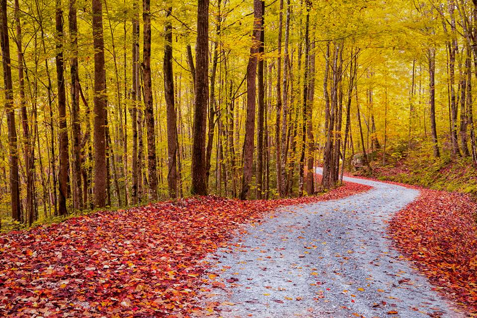 Wherever your travels take you this fall, I hope the change of season will take you on a road like this one to experience fall colors. This gorgeous picture was taken at Big South Fork National River & Recreation Area. The park buffers the Cumberland River as it runs across the Kentucky-Tennessee border, boasting miles of scenic views and lovely wooded trails. Photo by National Park Service. Posted on Tumblr by the US Department of the Interior, 9/22/16.