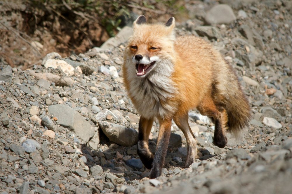 Even this fox is happy it's Friday! Tweeted by the US Department of the Interior, 9/16/16.