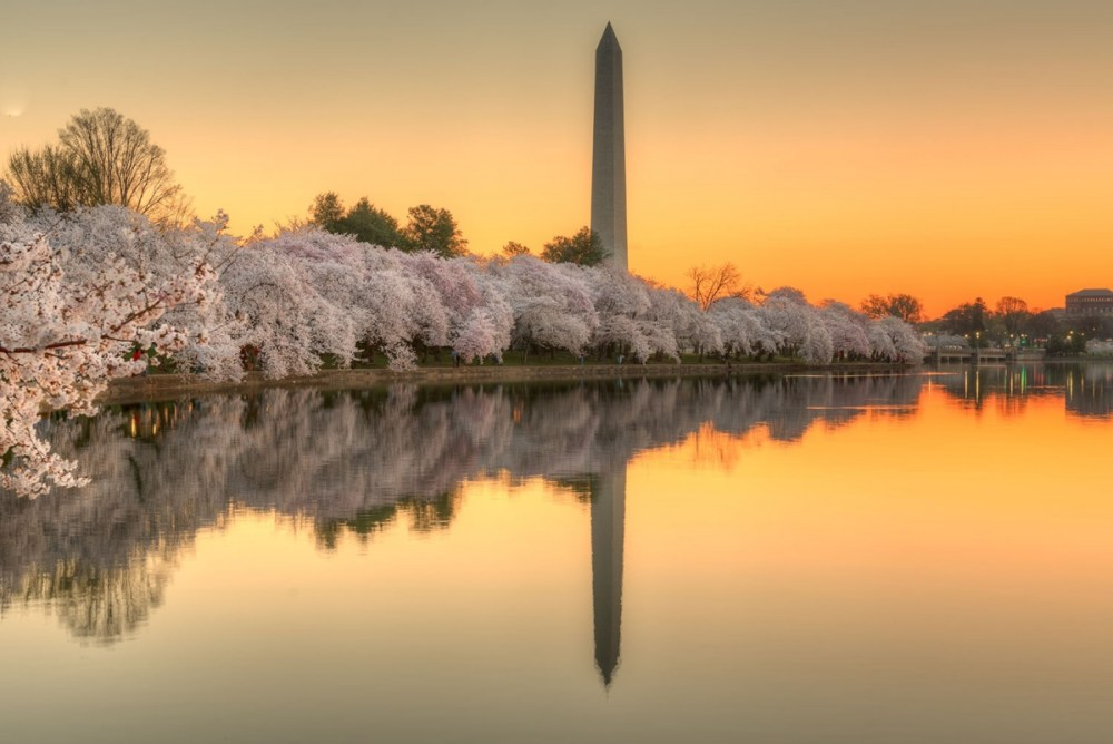 Sunrise from the Tidal Basin with the Washington Monument in the background as the cherry blossoms reach their peak. Photo by Jeff Norman. From the Department of the Interior blog.