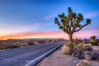 Another beautiful sunset on the road through California. That funny looking thing is a Joshua Tree, in Joshua Tree National Park. Photo by Ben Pelta-Heller. Tweeted by the US Department of the Interior, 11/25/16.